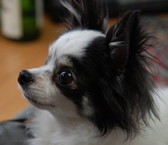 dog16-1.jpg