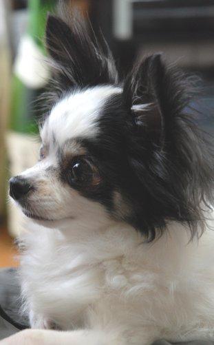 dog16-2.jpg