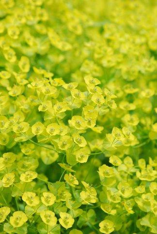 flower14-1_20110118133511.jpg