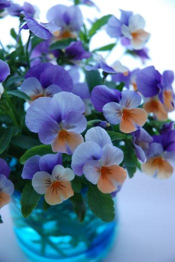 flower14-2.jpg