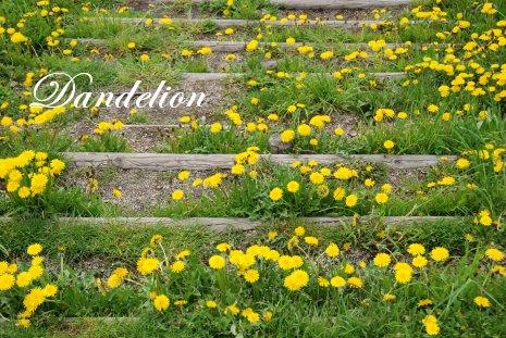 flower16-1.jpg