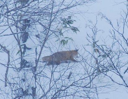 fox11-1.jpg