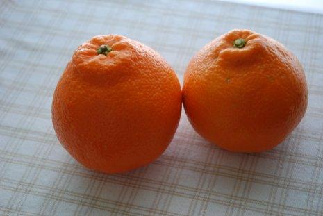 orange14-1.jpg
