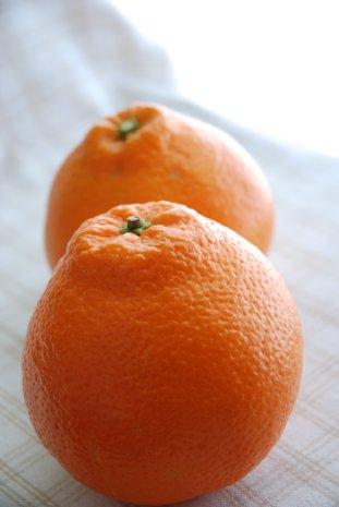 orange14-2.jpg