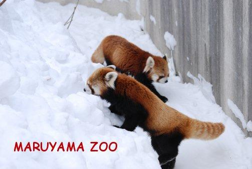 zoo16-1.jpg