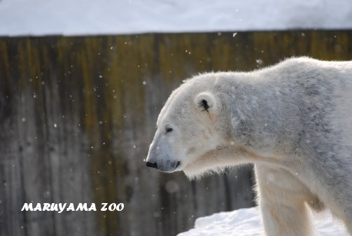 zoo16-39.jpg