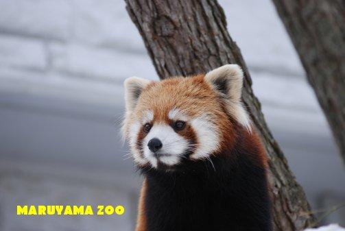 zoo16-4.jpg