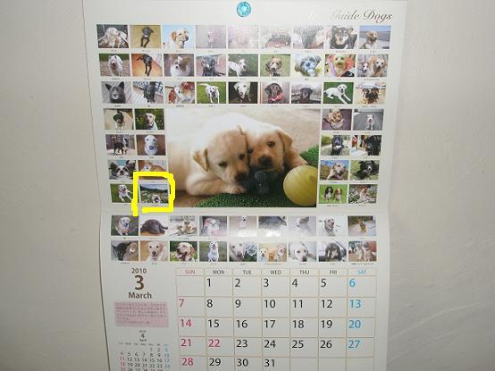 盲導犬カレンダーここ