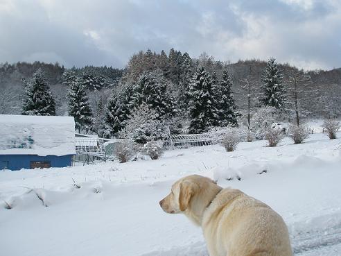 初雪2010-1