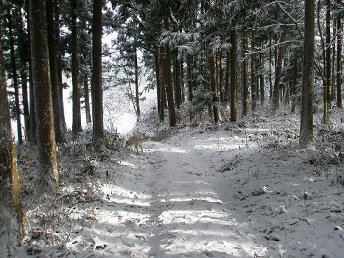 初雪2010