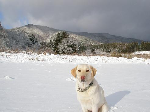 初雪2010-2