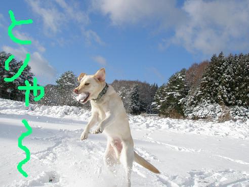 初雪2010-4
