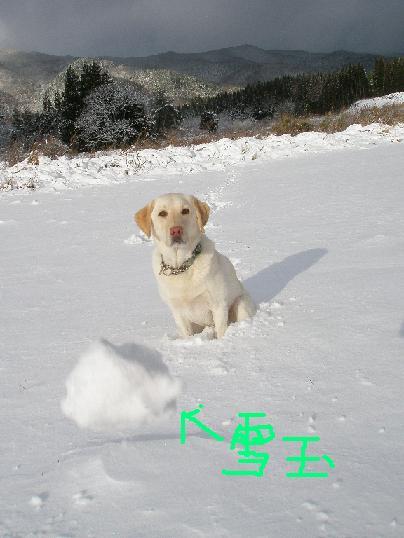 初雪2010-3