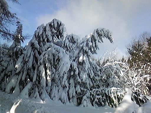 雪2010.01.5