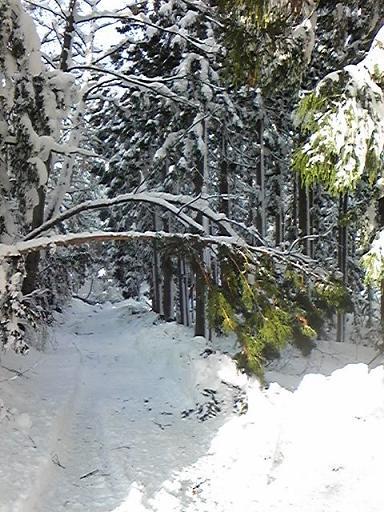 雪2011.0105