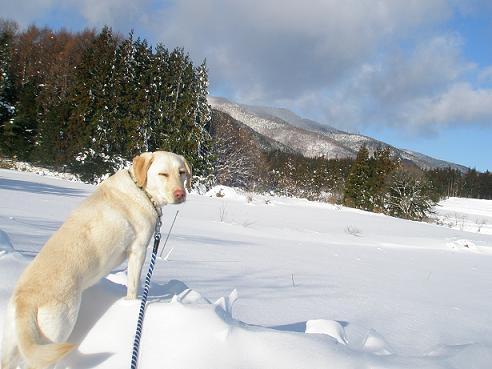 2011大雪