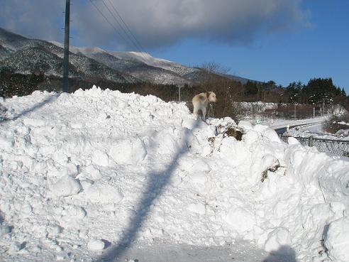 2011大雪1