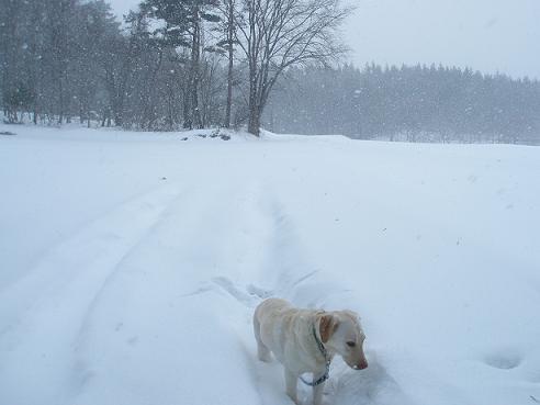 雪がたくさん降る