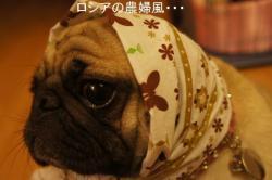 繧ャ繝エ繝ェ繧ィ繝シ繝ォ縲?縺阪↑縺薙■繧・s・点convert_20101017214609