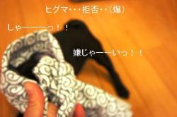 繧ャ繝エ繝ェ繧ィ繝シ繝ォ縲?繧ゅ↑縺九■繧・s_convert_20101017215007