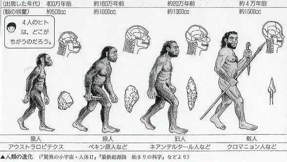 人類の進化3