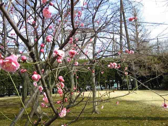 今年の初梅