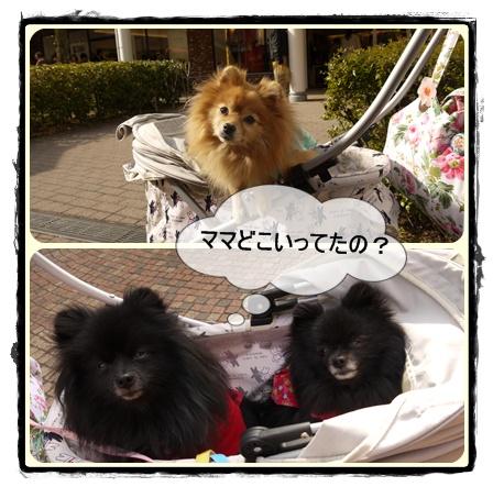cats_20110123203345.jpg