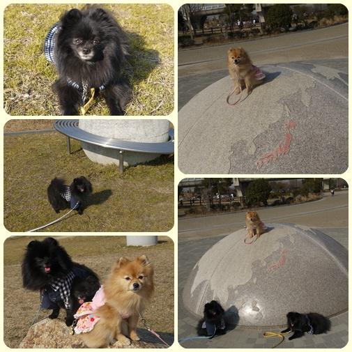 cats_20110203181334.jpg
