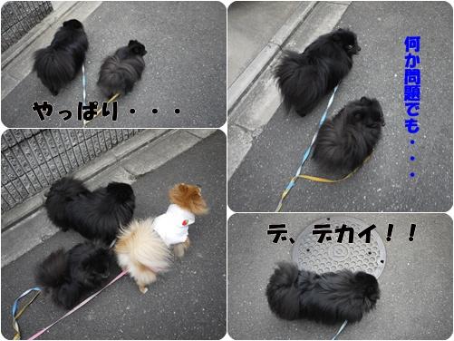 cats_20110217181126.jpg