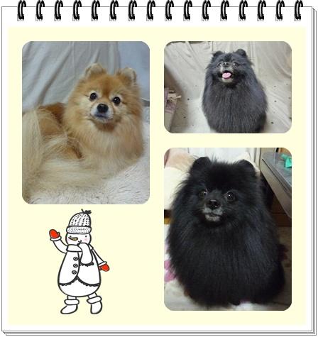 page_20101226191406.jpg