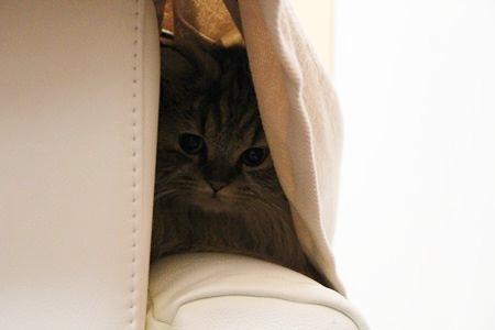 隠れてるねん♪