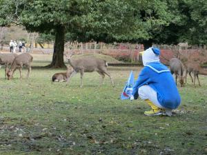 奈良で鹿に警戒される