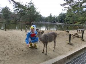 奈良で鹿との距離が縮まる