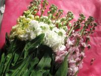 flowerbosoakiyasama