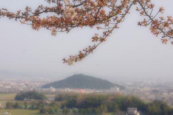 桜耳成山2