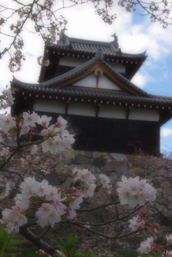 郡山城桜4月