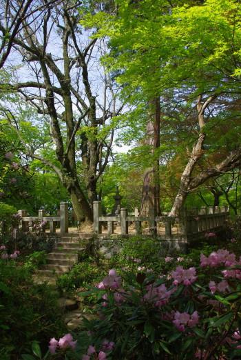 岡寺義淵廟所