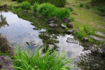 江川湧水1