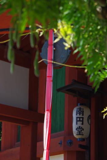 南円堂藤2