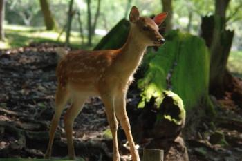 鹿バンビ2