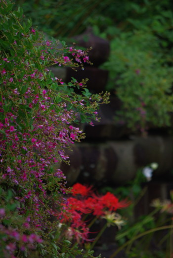 元興寺萩と彼岸花