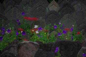元興寺彼岸花と桔梗