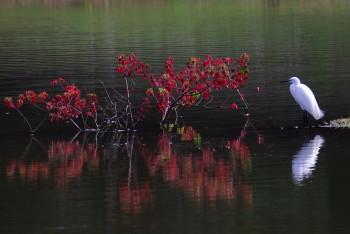 大仏池鷺0