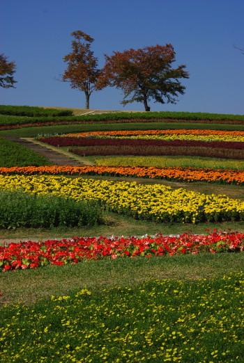 ダリア・花の広場