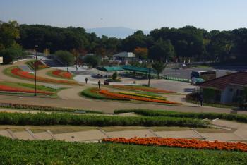 ダリア花の広場
