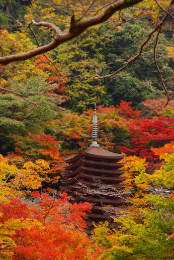 談山神社紅葉11月
