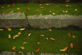 笛吹神社石段の落葉11月