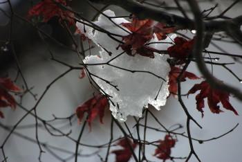 吉野山雪と紅葉