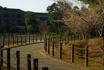 深田池桜0