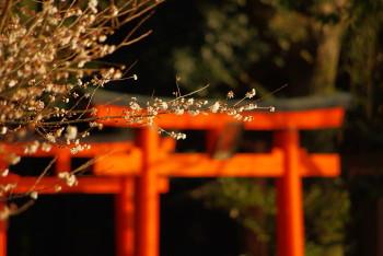 深田池桜1